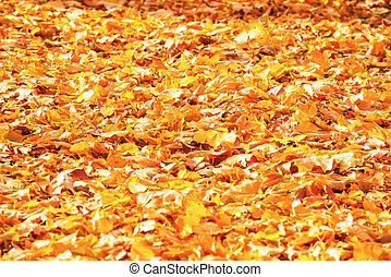 Autumn fallen orange leaves in a park