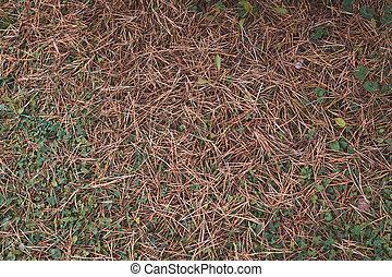 Autumn fallen pine needles background