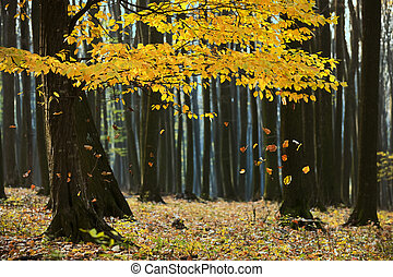 Autumn Falling Leaves in Forest