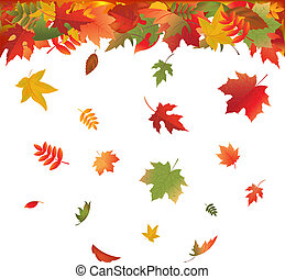 Falling Leaves - Autumn Falling Leaves, Isolated On White...