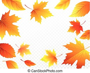 Autumn falling leaves on transparent checkered background. Autumnal foliage fall leaf flying in wind motion blur. Vector illustration