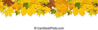 Autumn falling maple leaves isolated