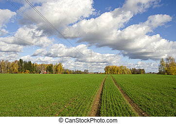 autumn farm field with green cereal crop and tractor traces