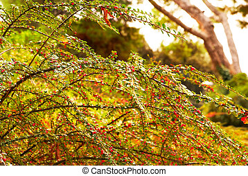 Autumn festive branches of shrubs with red berries