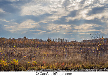 Autumn field and forest, clouds illuminated by the dawn