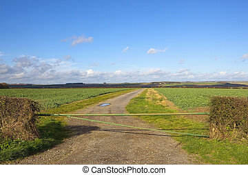 autumn field gate
