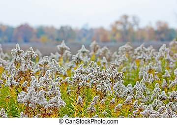 autumn field with prickly plants