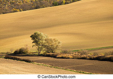 Autumn field with trees