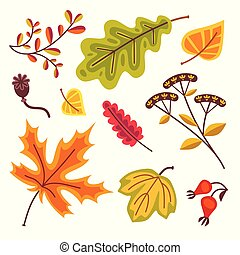 Autumn floral set with leaves of oak leaves, maple leaves