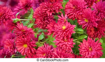 Autumn flower background