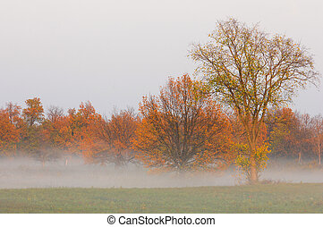 Autumn fog, sunrise in the forest