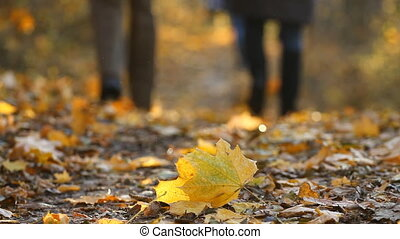 Autumn foliage and people - Autumn foliage and walking...