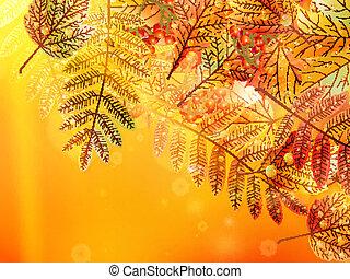 Autumn foliage background.