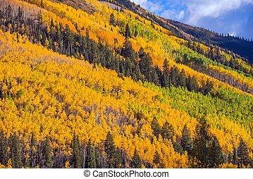 Autumn Foliage Colorado. Colorful Fall Foliage in Colorado ...