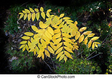 Autumn Foliage Illumination