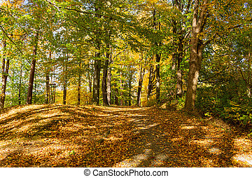 Autumn foliage in nature green forest