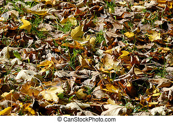 Autumn foliage in the forest