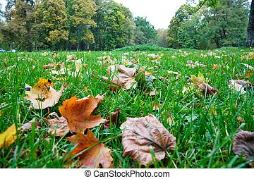Autumn foliage in the green grass