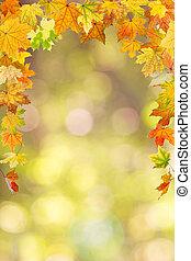 Autumn foliage - Maple autumn foliage, on natural background...