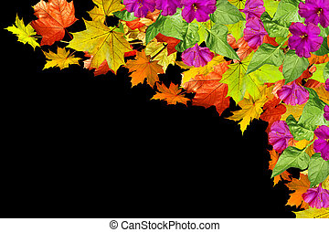 Autumn foliage. maple leaves isolated on black background