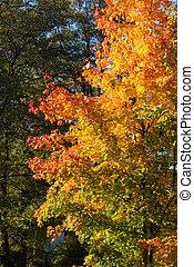 autumn foliage of trees