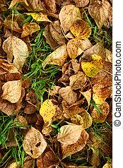 Autumn foliage on green grass