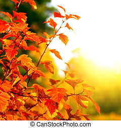 Autumn Foliage with Bright Leaves on the Tree Closeup