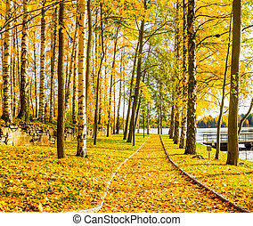 Autumn footpath by the lake - Footpath by the lake covered ...