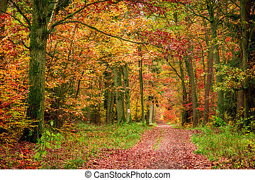 Autumn footpath in the forest in Europe