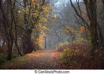 Autumn footpath in the park
