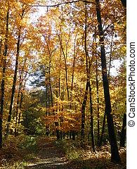 Autumn forest-4