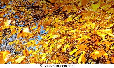 autumn forest 4k