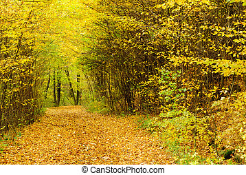 Autumn forest - A view of forest's path in golden light with...