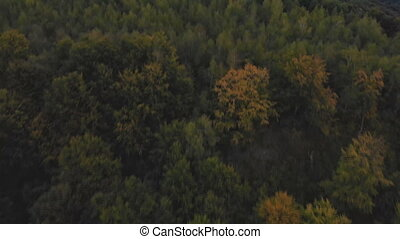 Autumn forest aerial drone over a forest and a mountain on a sunny day