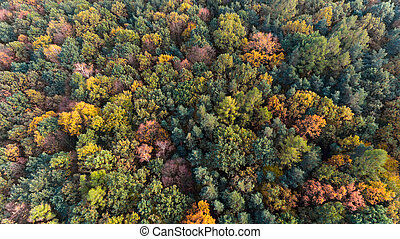 Autumn forest aerial drone top view