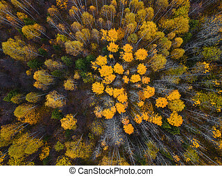 Autumn forest aerial drone view.