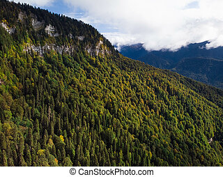 Autumn forest aerial view