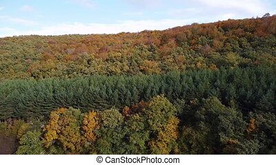 Autumn forest aerial view. Woodland in fall season, nature ...