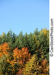 Autumn forest against blue sky