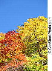 autumn forest against blue sky