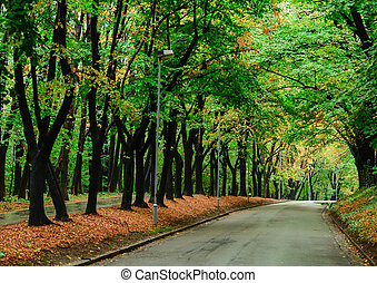 Autumn forest and empty road
