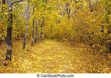 autumn forest and fallen yellow leaves