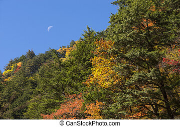 Autumn forest and moon - Autumn forest in front of moon...