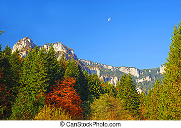 Autumn forest and mountain