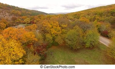 Autumn forest and pond from the height of the bird's flight