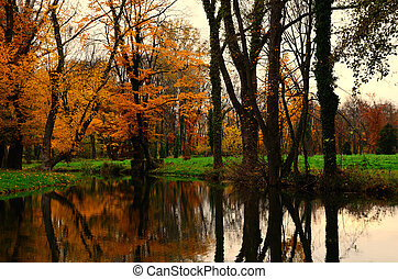 autumn forest and reflection in creek