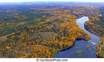 Autumn forest and river from a height. Aerial view