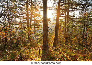 Autumn forest and sunshine.
