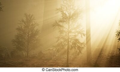autumn forest and trees in morning fog