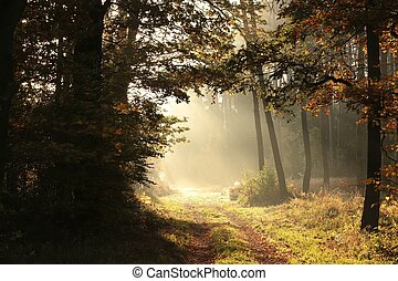 Autumn forest at sunrise